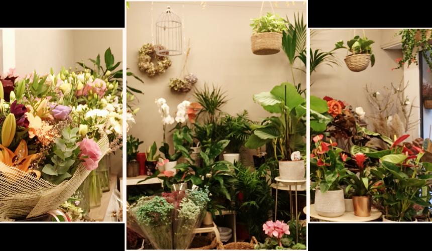 Flors sant gervasi tienda